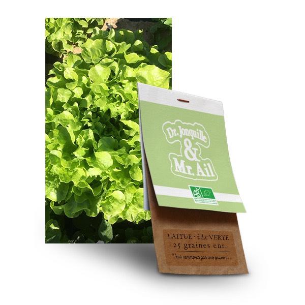 Graine laitue feuille de chêne verte bio - Dr. Jonquille & Mr. Ail