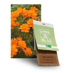 graine fleur orange bio - Dr. Jonquille & Mr. Ail