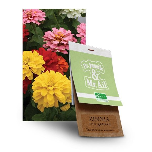 Graines de Zinnia Bio - Dr. Jonquille & Mr. Ail
