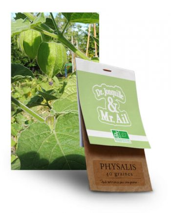 graine de physalis bio