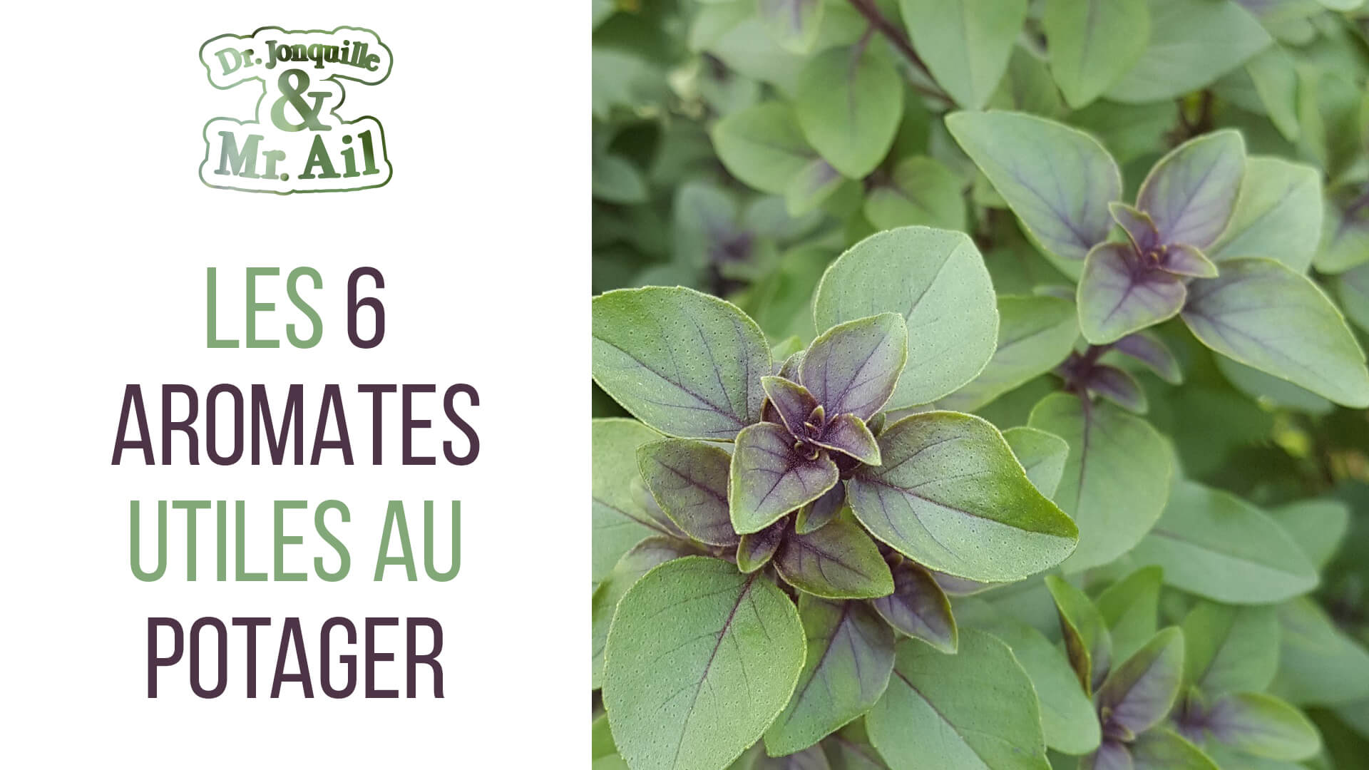 Entretenir Un Pied De Basilic les 6 plantes aromatiques utiles au potager | dr. jonquille