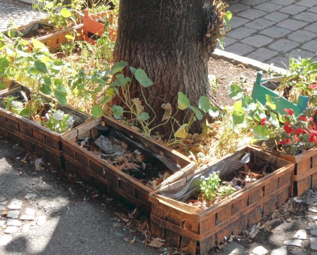 Dr. Jonquille & Mr. Ail - Blog - Jardinage urbain