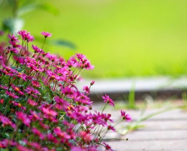 Que sème t-on en juillet? Tout est dans cet article! Regardez les fleurs, aromates et légumes à semer en juillet