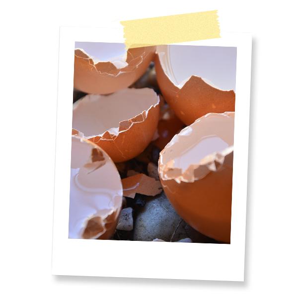 Dr. Jonquille & Mr. Ail - Blog - Comment lutter contre les limaces - Coquille d'oeuf
