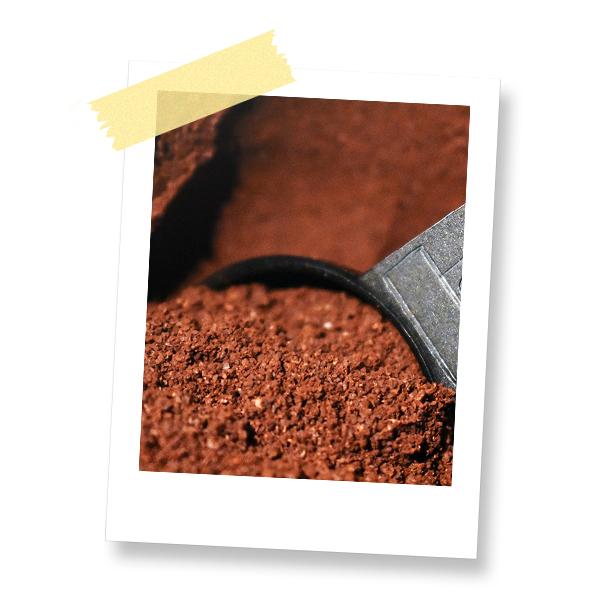 Dr. Jonquille & Mr. Ail - Blog - Comment lutter contre les limaces dans le potager