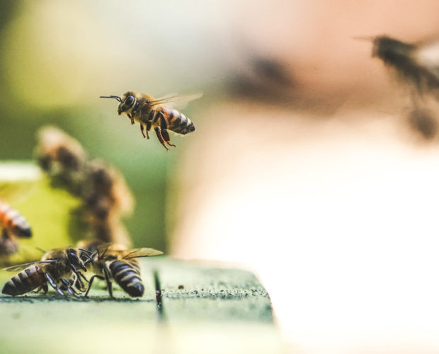 Les abeilles et autres insectes sont utiles. À quoi servent-ils?