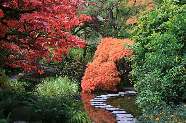 Jardinothérapie - Jardins Japonnais - Blog - Dr. Jonquille & Mr. Ail