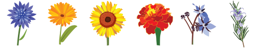 Bandeau Les fleurs pour les abeilles