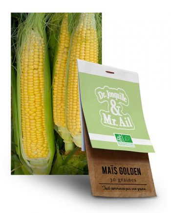 Graine Maïs Golden Bantam BIO