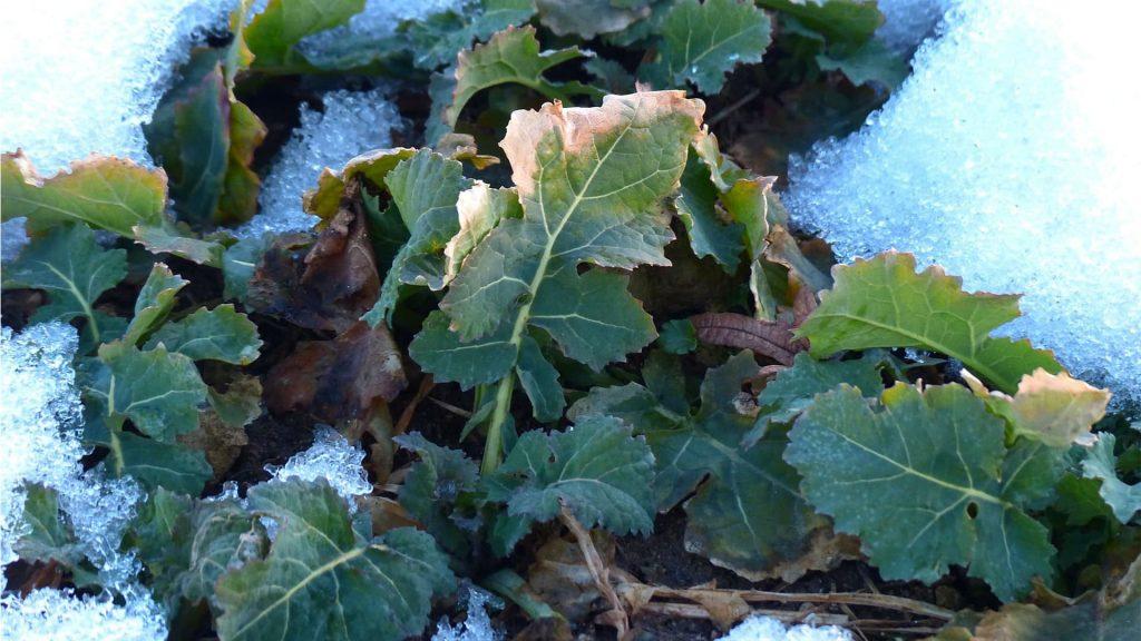 Que semer en février - Blog - Dr. Jonquille & Mr. AIl