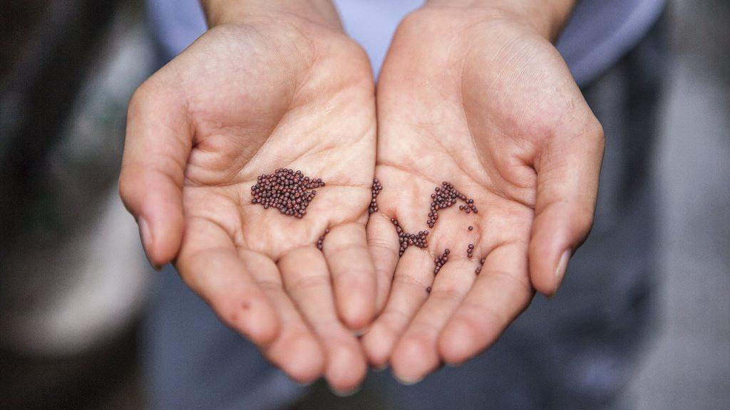 Qu'est-ce qu'une graine bio - Blog - Dr. Jonquille & Mr. Ail