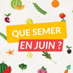 Les fruits, légumes et aromates à semer en Juin