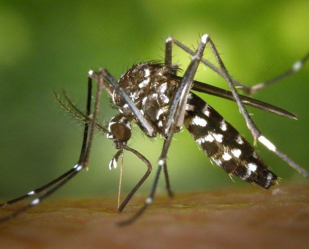 Les 7 plantes qui repoussent les moustiques - blog - Dr. Jonquille & Mr. Ail