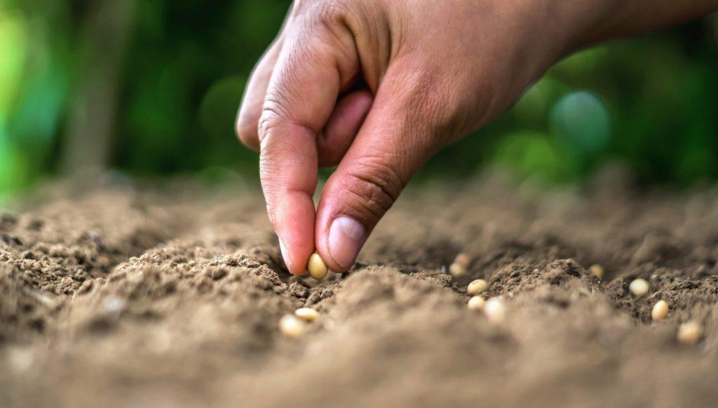 Qu'est-ce qu'une graine reproductible - blog - Dr. Jonquille & Mr. Ail