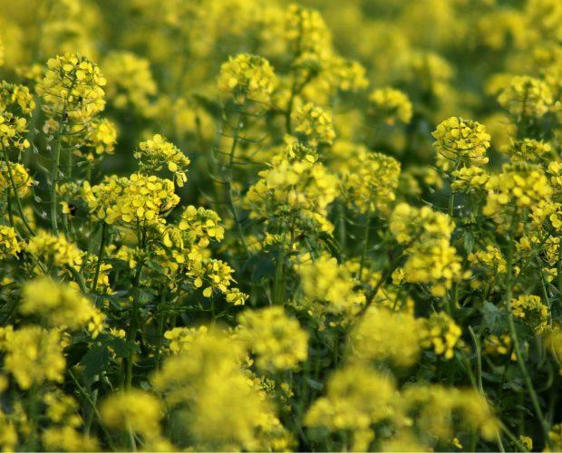 Les 3 défis de l'agriculture moderne - blog - Dr. Jonquille & Mr. Ail