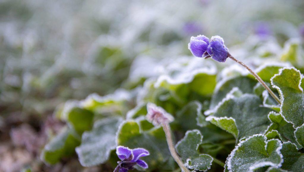 Que faire au jardin en janvier | Blog | Dr. Jonquille & Mr. Ail