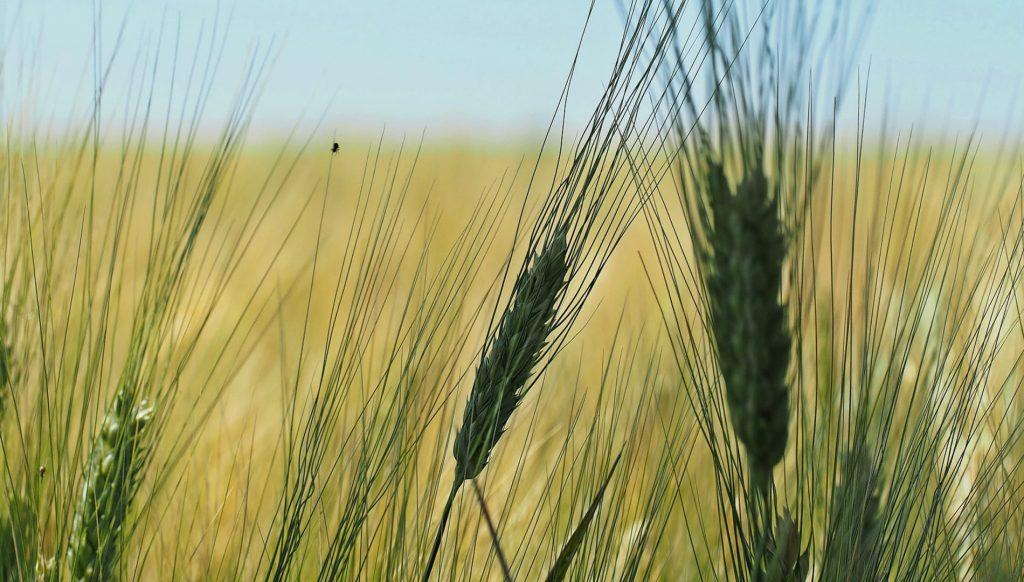 Qu'est-ce que l'agroécologie | Blog | Dr. Jonquille & Mr. Ail