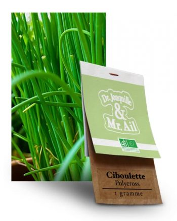 Graines Bio Ciboulette Polycross - Dr. Jonquille & Mr. Ail