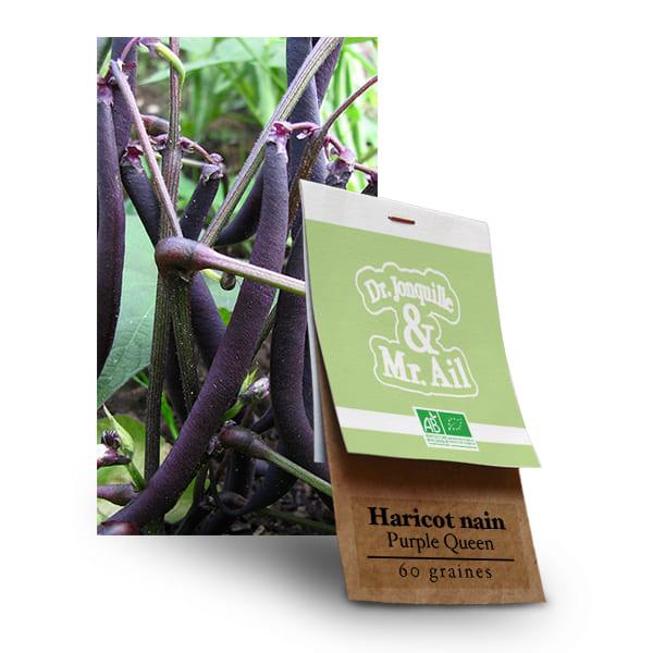 Graines Bio Haricot Nain Purple Queen
