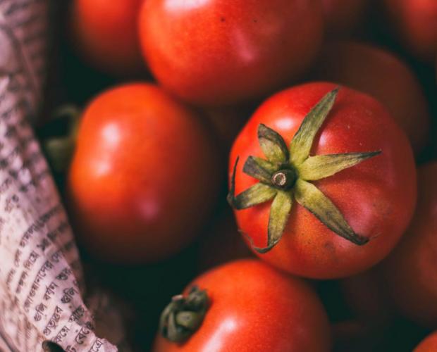 7 conseils pour réussir ses semis de tomates - Blog - Dr. Jonquille & Mr. Ail