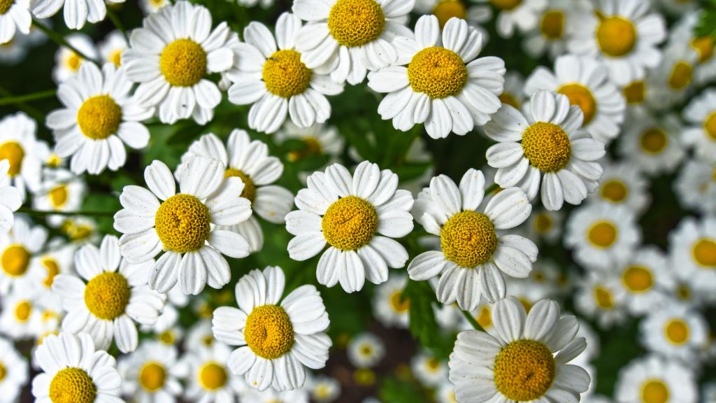Les bienfaits de la phytothérapie - Blog - Dr. Jonquille & Mr. Ail