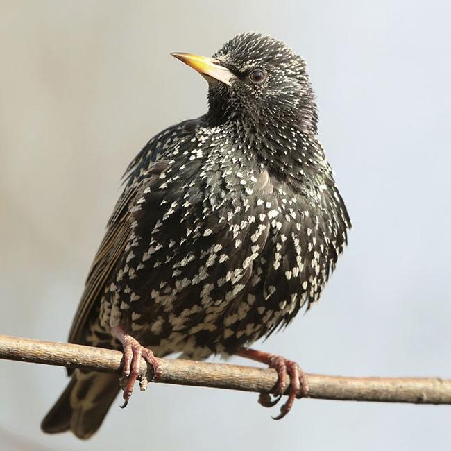 Les oiseaux du jardin - Blog - Dr. Jonquille & Mr. Ail