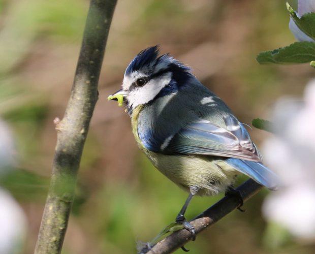 Les oiseaux des jardins - Blog - Dr. Jonquille & Mr. Ail
