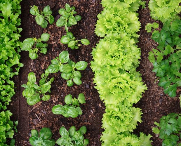 Les meilleurs légumes pour un potager à l'ombre - Blog - Dr. Jonquille & Mr. Ail