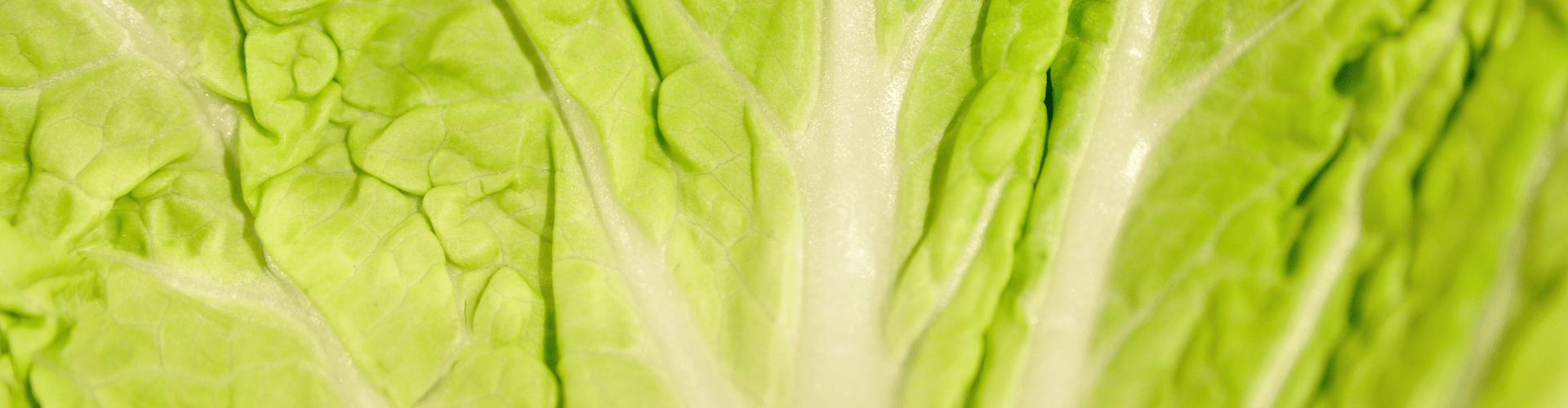7 légumes perpétuels - Blog - Dr. Jonquille & Mr. Ail