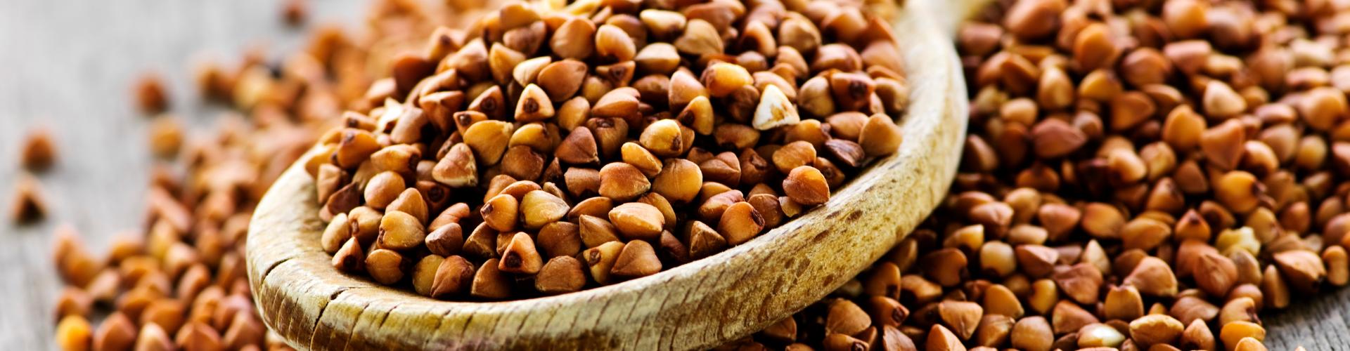 Comment conserver ses graines ? - Blog - Dr. Jonquille & Mr. Ail