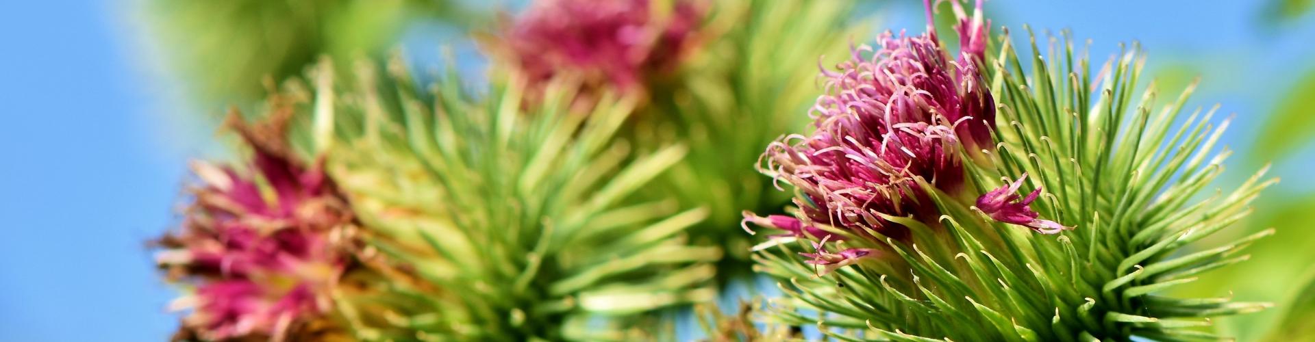 Les plantes sauvages du jardin: rendons justice aux «mauvaises herbes» ! - Blog - Dr. Jonquille & Mr. Ail