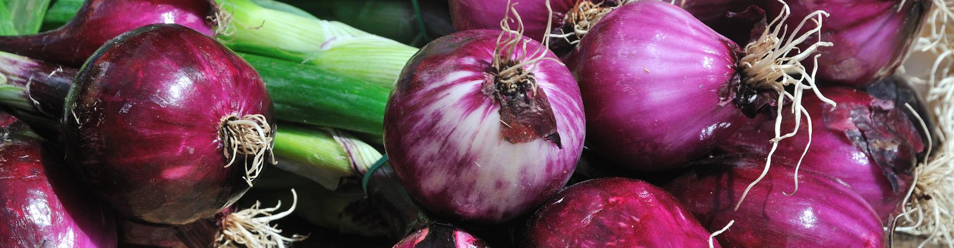 L'oignon : semis, culture, et récolte - Blog - Dr. Jonquille & Mr. Ail
