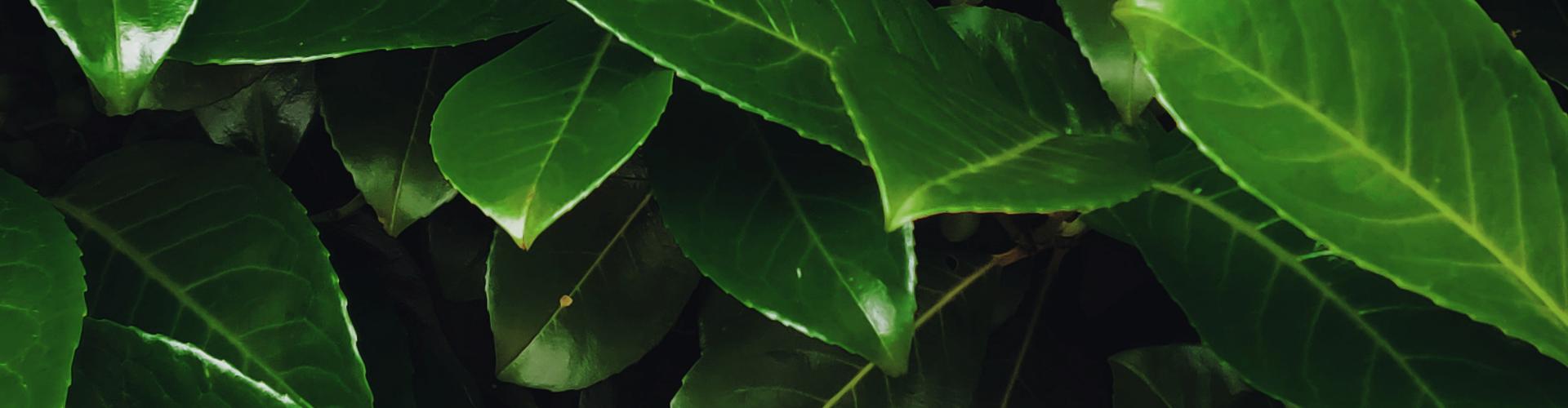 Qu'est-ce que l'aromathérapie - Blog - Dr. Jonquille & Mr. Ail