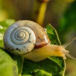 La courge : semis, culture, et récolte - Blog - Dr. Jonquille & Mr. Ail