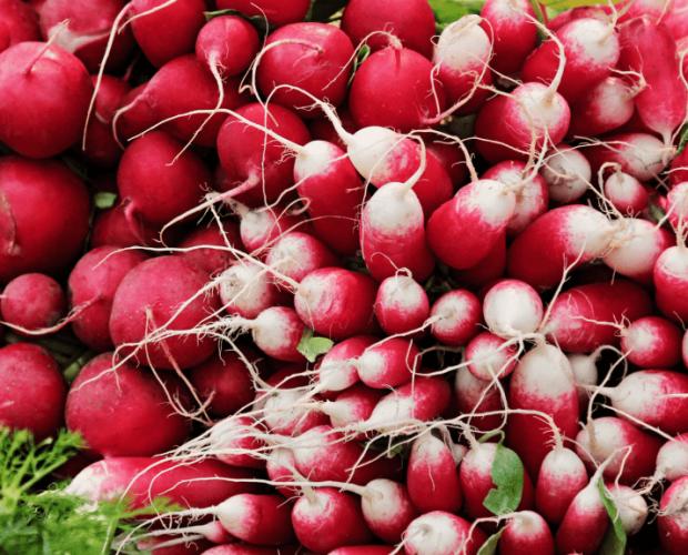 Le radis : semis, culture, et récolte - Blog - Dr. Jonquille & Mr. Ail