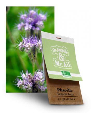 Graine bio et reproductibles Phacélie Tanacetifolia