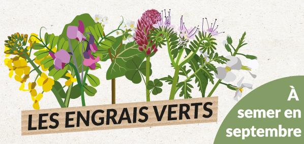 Sélection graines bio et reproductibles engrais verts
