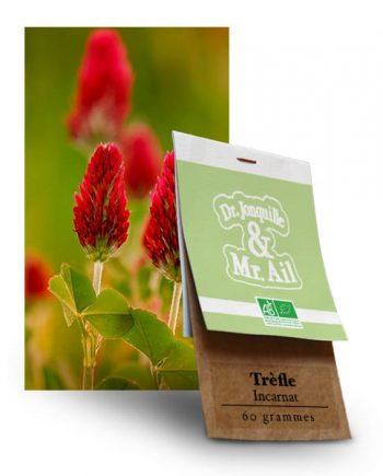 Graines Bio et Reproductibles Trèfle Incarnat